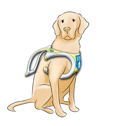 The new guide dog harness